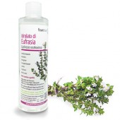 Eyebright hydrolate